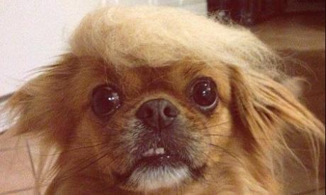 Donald Trump's election seems to have gone down well among canine voters