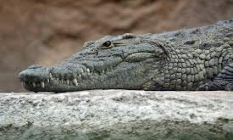 Mozambican footballer killed by crocodile whilst training