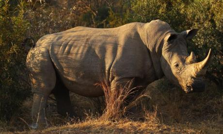 'Security for captive rhinos needs to be improved in light of the Paris rhino shooting', says TV presenter Nick Baker