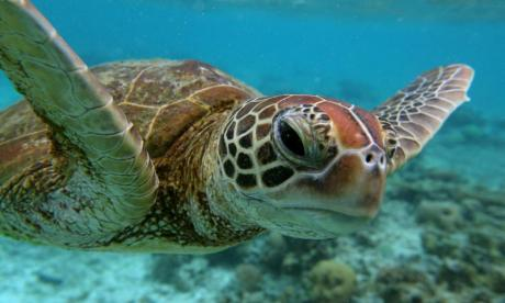 Turtle who swallowed 5kg of tourists' coins dies
