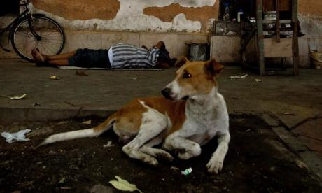 Indian street dogs help chase down and catch criminal