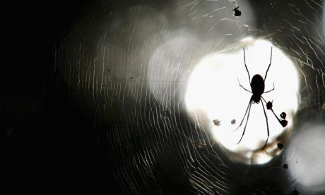 Spiders 'could eat the entire human population in a year'