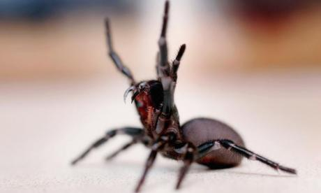 Spider venom could be used to prevent damaging effects of strokes