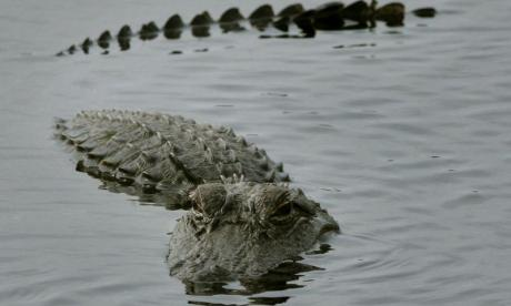 Prehistoric caiman remains in Catalonia date back 16 million years