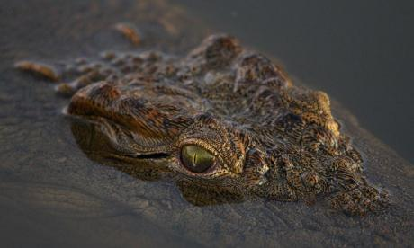 6-year-old saves friend from crocodile attack in India