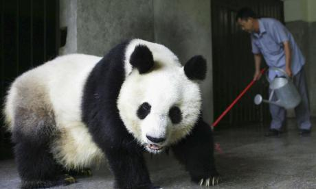 Berlin Zoo gets two Great Pandas on loan from China