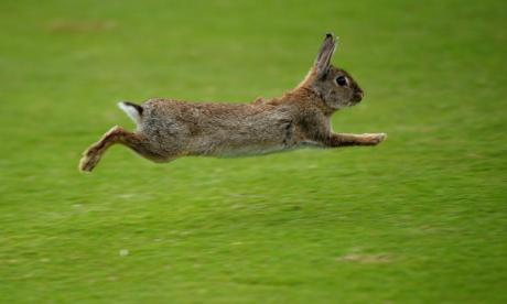 Podcast: The Big Debate with Jon Holmes - 'Rabbits keep the carrot population down and carrots are vermin and bring the plague'