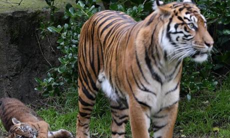 'Zookeeper tiger death is a reminder that these animals are not a joke', says zoologist