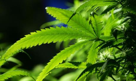 Liberal Democrats would legalise selling and growing cannabis if elected