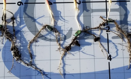 The Big Debate on roots: 'Without Rooters how would trees connect to the internet?'