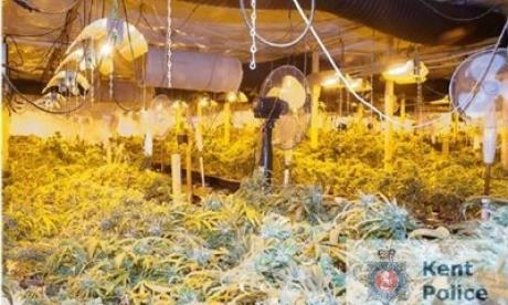 Fourteen imprisoned for multi-million pound conspiracy to produce cannabis