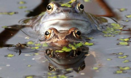 The Big Debate on frogs: 'frogs get paid more than other animals in BBC wildlife documentaries'