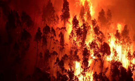Firefighters battle major blaze in the south of France started by cigarette butt