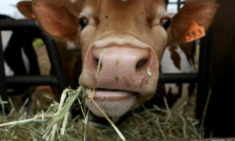 The Big Debate on eating: 'The cows are calling for more stomachs, they say four isn't enough'