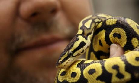 Room-mates find two-foot python in laundry room, but decide to keep it and name it T Swift