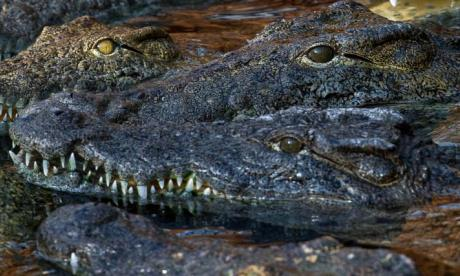 Manhunt continues for crocodile killer in Australia