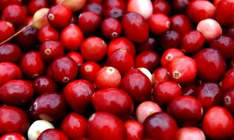 The Big Debate on berries: 'Are you anti or pro oxidants?'