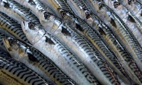 The Big Debate on mackerel: 'There should be a congestion charge in the sea to discourage mackerel from going in it'