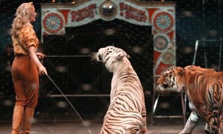 Paris votes to ban wild animals in circuses