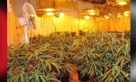 A picture of the cannabis farm (Merseyside Police)