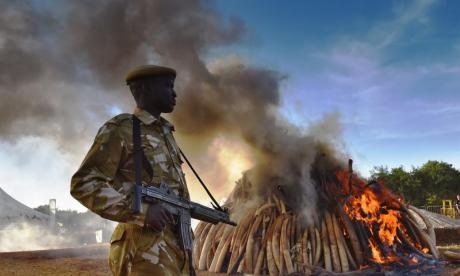 Officers said Janet Winstanley's activity could fuel demand for elephant poaching