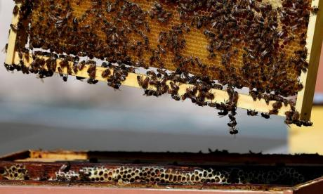 60,000 bees stolen from farm in Scotland
