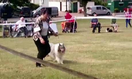 Benefit cheat caught after being filmed running at Crufts dog show