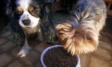 More than a third of pet owners considering putting animals on vegan diet