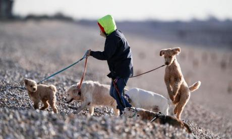 Dog walkers at risk of 'serious' hand injuries, surgeons warn