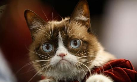 Grumpy Cat: Internet's most famous cat dies aged seven