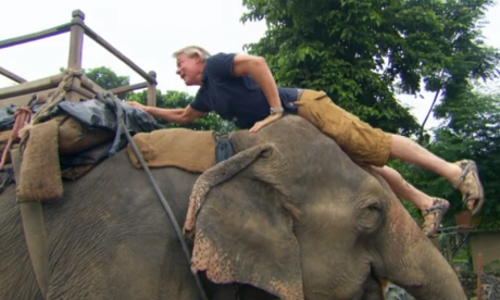 Animal charity drops actor Martin Clunes for riding elephant